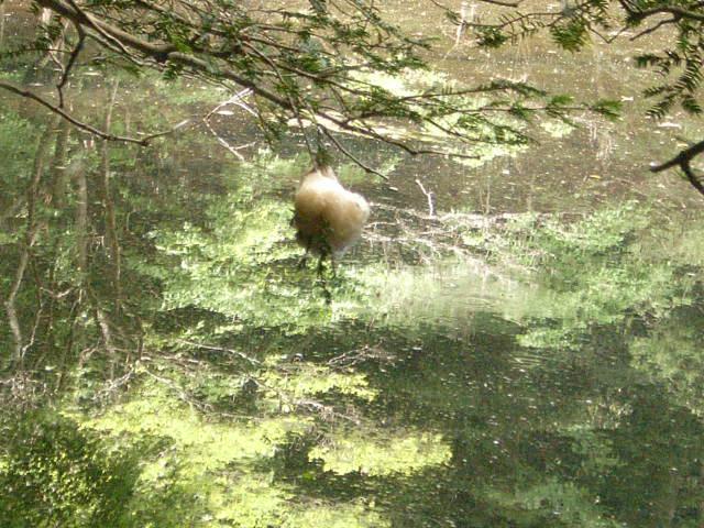 水辺の枝の卵